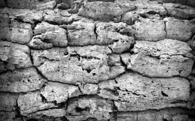 Skurcz betonu – czym jest i jakie czynniki na niego wpływają?